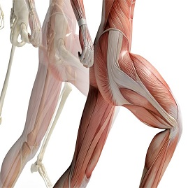 درمان درد استخوان لگن و کشاله ران و جلوگیری از عفونت مفصل هیپ